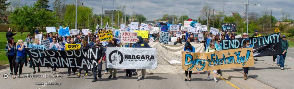 March On Marineland Landscape Indignants