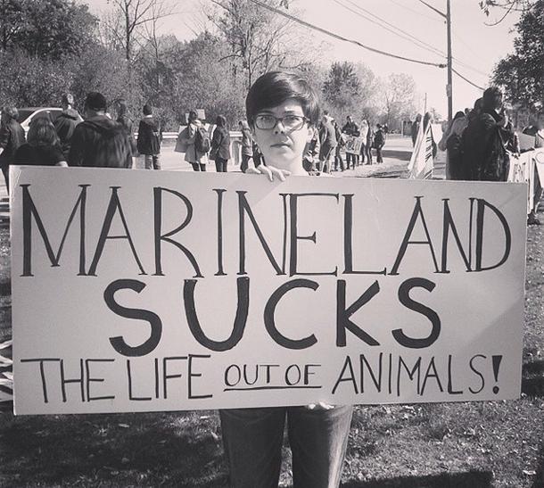 Viral News Zone: Marineland Animal Defense